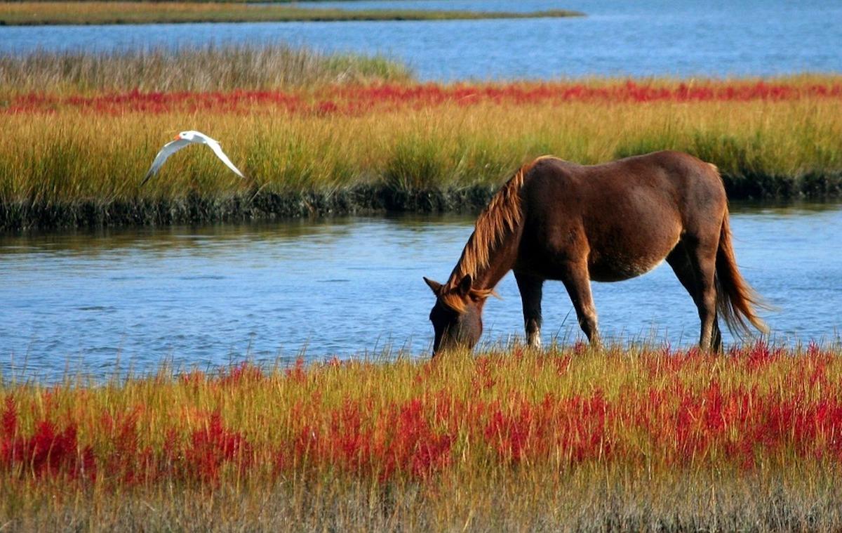 CBD til heste – en naturlig vej til velvære