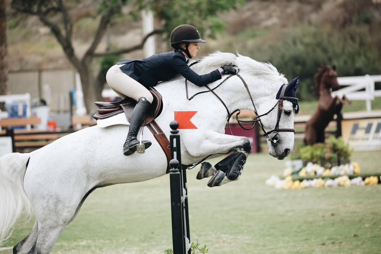 Hesteauktioner – find din næste hest på auktion