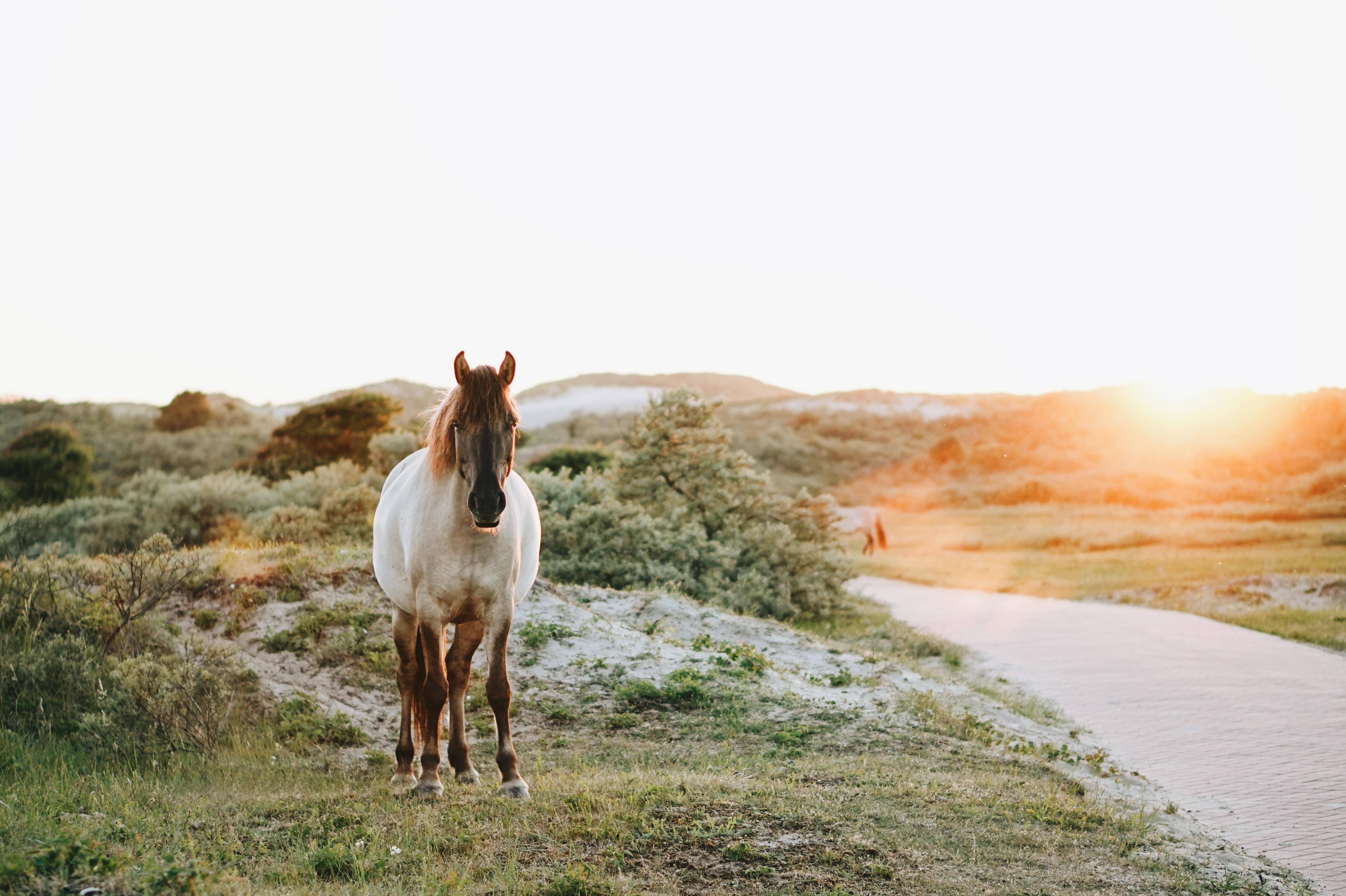 Cannabis olie – et behandlende middel til din hest