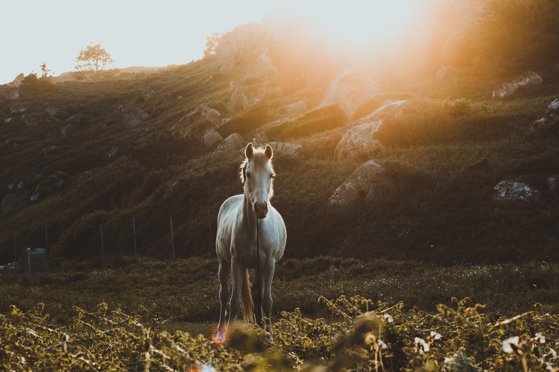 Kan CBD olie hjælpe min hest?