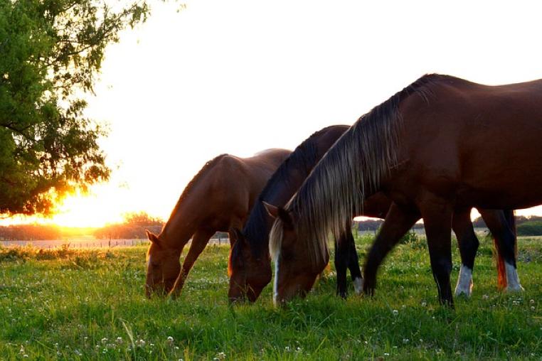 3 gode råd til at fodre din hest helt rigtigt