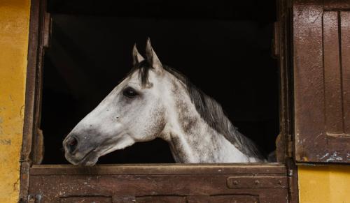 Der er mange andre fornøjelser i livet end hestesport