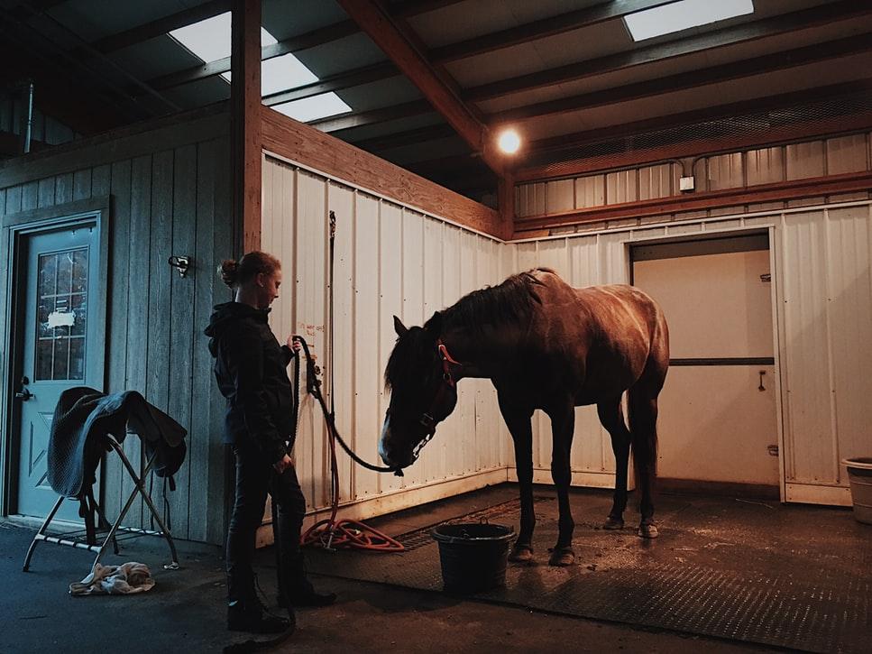 Tre ting, som du skal overveje, inden du bygger en hesteboks på din matrike