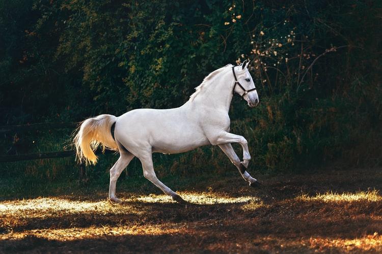Tre gode råd til at vise din kærlighed for heste i hjemmet